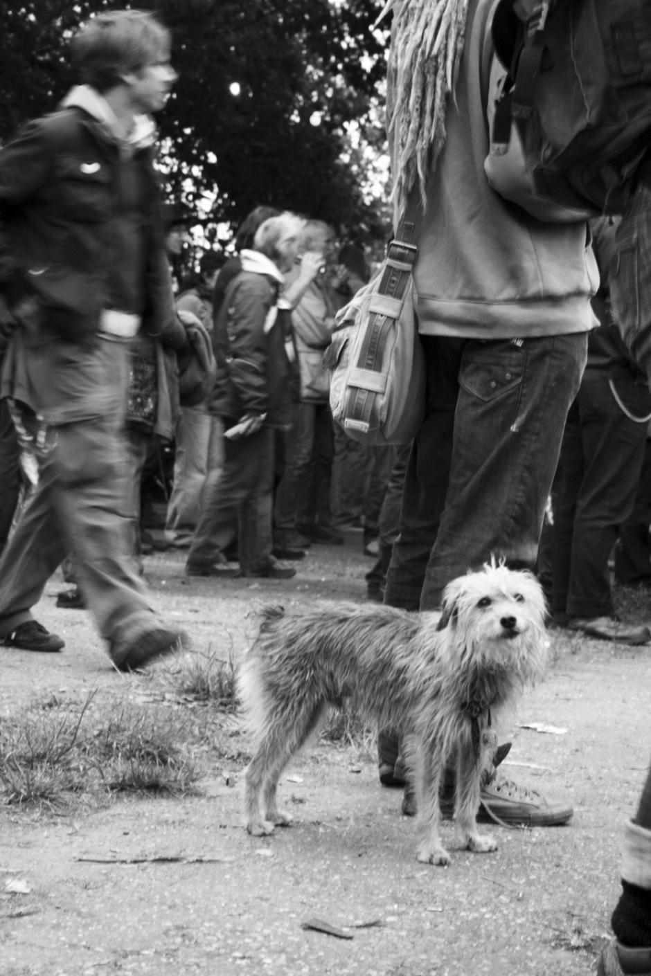 dogdayz_4
